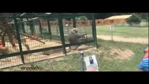 حمله یک بابن به دو دختربچه در باغ وحش