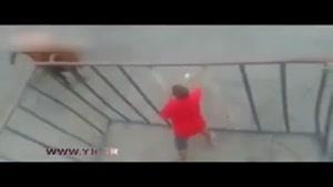 حمله غافلگیرانه گاو وحشی به یک مرد در قفس