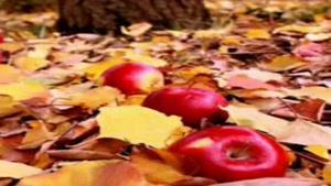 آهنگ شاد و پر انرژی مهر۲ از راتین رها در آلبوم هنرمند