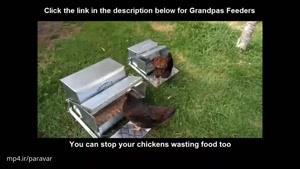 دانخوری مرغ سنتی، ولی خلاقانه
