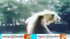 کشتی خرس گنده با مرد بد قلق