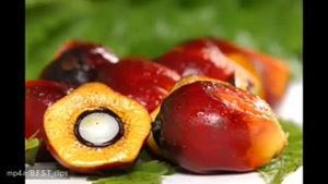خواص میوه پالم