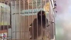 پرنده ای که در کتاب گینس ثبت شد