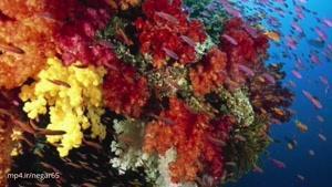 نابودی تدریجی مرجانهای خلیج فارس به دلیل گرمای بیسابقه جنوب
