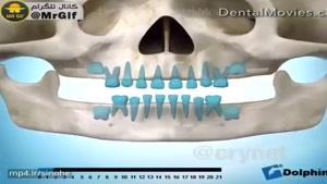 نحوه رشد دندان در کودکان