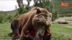 رام شدن عجیب یک خرس وحشی!