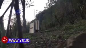 رهاسازی یک پلنگ پس از درمان در جنگل رودسر