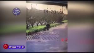 له شدن مرد میانسال زیر چرخهای یک خودرو