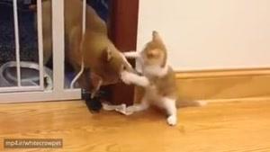دعوای جالب سگ و گربه