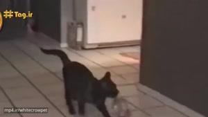 خنده دار ترین حرکات گربه های دوس داشتنی