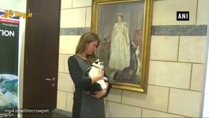 با گربه دیپلمات به نام لورنس عبدون آشنا شوید