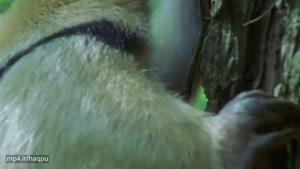 زندگی پستانداران 8
