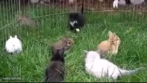 وقتی گربه ها با خرگوش ها بزرگ می شوند!
