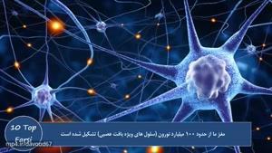 ۱۰ تا از نکات جالب درباره مغز انسان ها و ۸ نکته دیگر