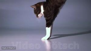 حرکات یک گربه به صورت آهسته