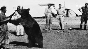 خرس ایرانی که در جنگ جهانی دوم جنگید