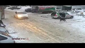 زجرکش شدن یک سگ توسط راننده زن