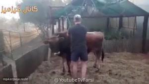 گاوه قبلش تذکر داد که ول کن بیا پایین و گرنه بد میبینی😂