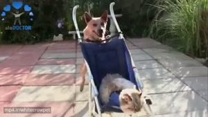 دوستی جالب حیوانات با یکدیگر