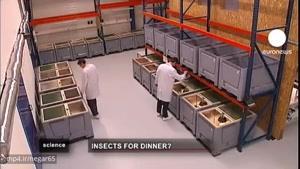 حشرات، منبع مواد غذایی برای جمعیت در حال افزایش دنیا