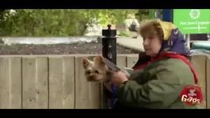 دوربین مخفی سلاح سگی