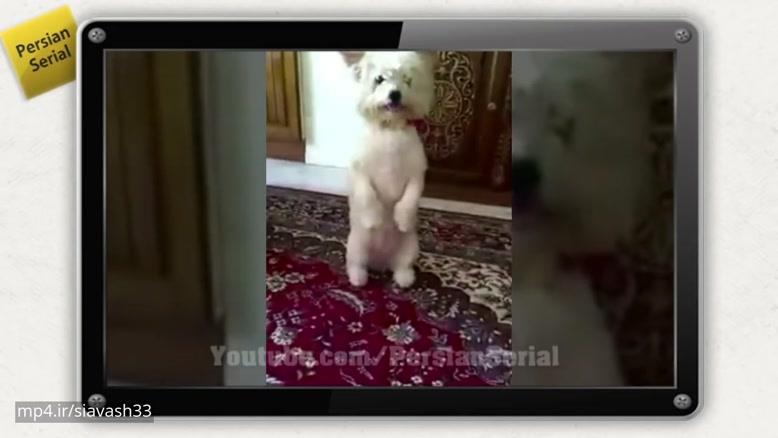 سگ حرف گوش کن