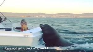 فوکی که آویزون قایق تفریحی شده!