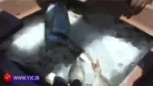 توقیف لنجی که به آبهای ایران تجاوز کرده بود