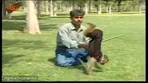 شیرین کاری میمون