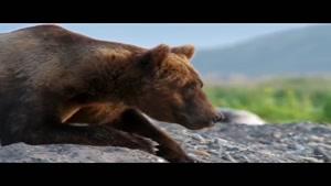 مستند شکار 6