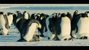 مستند خاندان ها 2 -  پنگوئن امپراتور