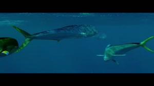 چالش پرنده ماهی ها بین دو صیاد