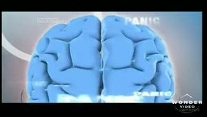 مستند زیبای مغز قسمت اول