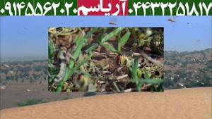 تکنیک حمله ی ملخ ها به مزارع