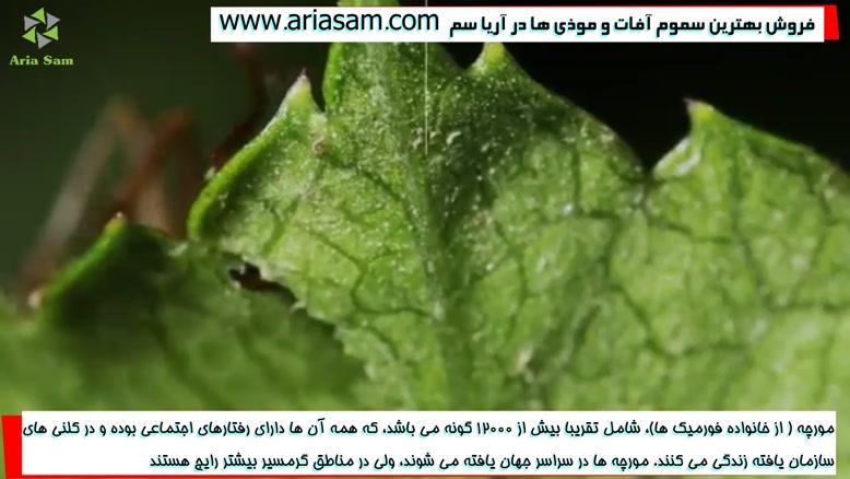 آیا تا به حال داخل لانه مورچه را دیده اید؟