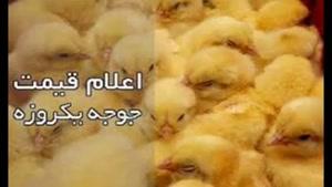 قیمت خرید تخم مرغ در اذربایجان