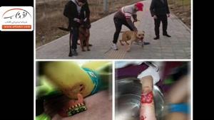 سگ چرانها در شهر! | فیلم