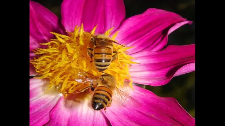 فروش عسل طبیعی وارگانیک و درمانی