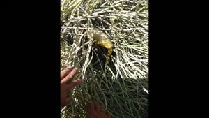فروش انواع عسل طبيعي درماني و ارسال به سراسر ايران