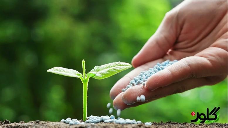 آموزش کاشت و نگهداری از گیاه زاموفیلیا