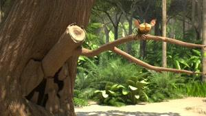 انیمیشن گروه جنگل فصل ۱ قسمت شش