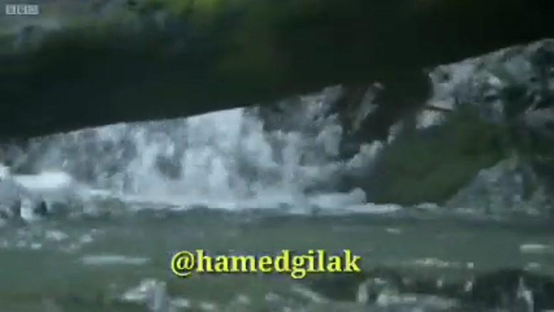 دوبله خنده دار عبور پرنده ها از رودخانه ها