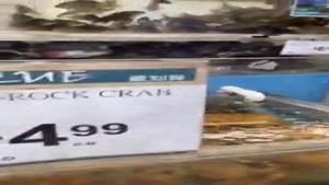 قیمت ماهی و میگو در آمریکا