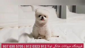 سگ اپارتمانی