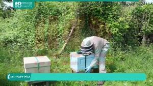 آموزش زنبور داری و پرورش زنبور عسل به صورت کامل - www.۱۱۸file.com