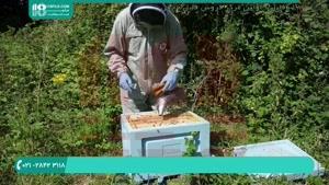 زنبورداری از صفر تا صد