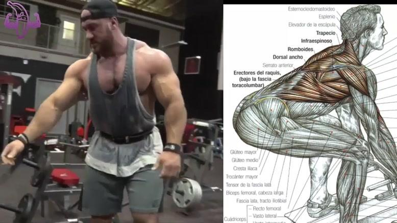 آموزش 7 تمرین بدنسازی برای عضلات پشت و زیر بغل