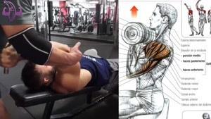 آموزش 8 تمرین برای عضلات شانه ها