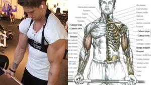 آموزش 7 تمرین برای گرد کردن عضلات جلو بازو