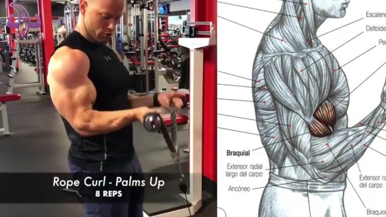 آموزش 12 تمرین بدنسازی برای عضلانی کردن بازوها